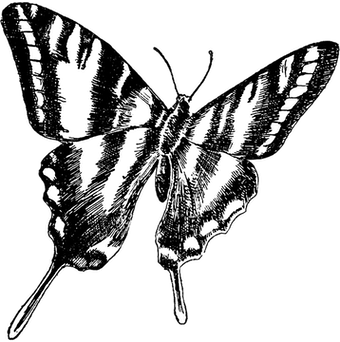 Butterfly Symbol